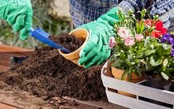 Лунный календарь для цветоводов на 2018 год: оптимальные сроки для посадки и выращивания цветов
